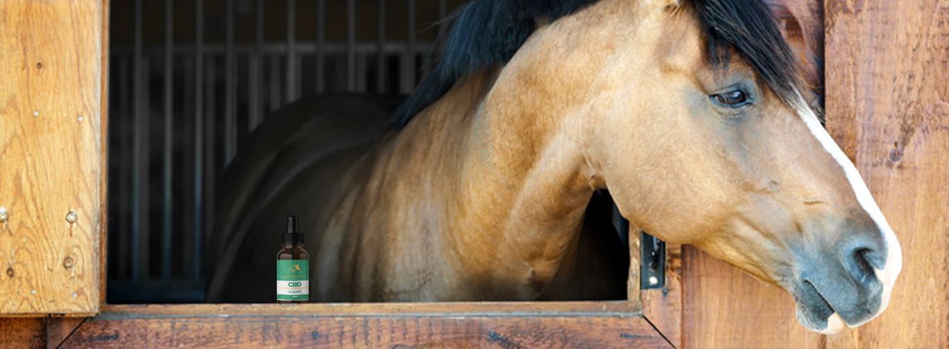 CBD Pet Horse Tincture Oil - Retail & Wholesale CBD Products