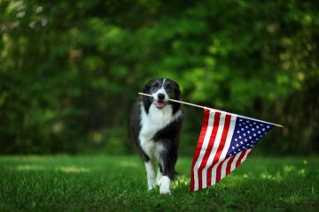 Keep Dogs, Cats, and Other Pets Safe During Fireworks with CBD for Pets