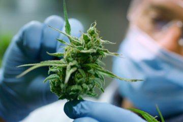 Using Cannabis to Treat Inflammation & COVID-19 | Casco Bay Hemp Maine CBD
